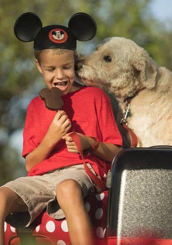 Select Walt Disney World Hotels Allow Dogs