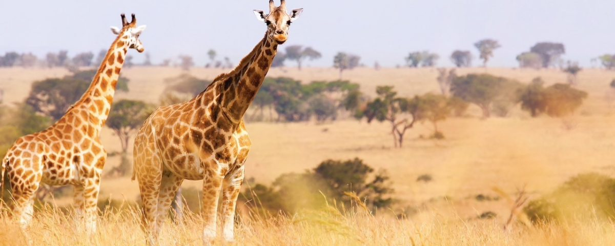 South Africa Adventures by Disney